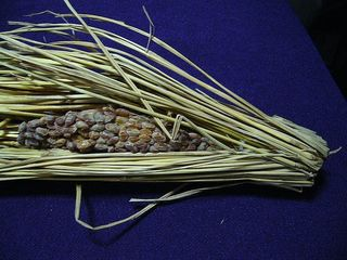 800px-Natto_wrapped_in_straw.jpg